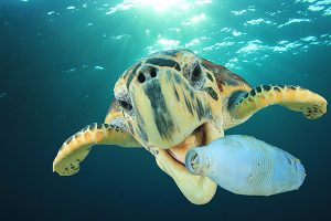 Turtle eats bottle