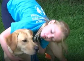Puppy being trained to warn girl with diabetes if blood sugar level too low